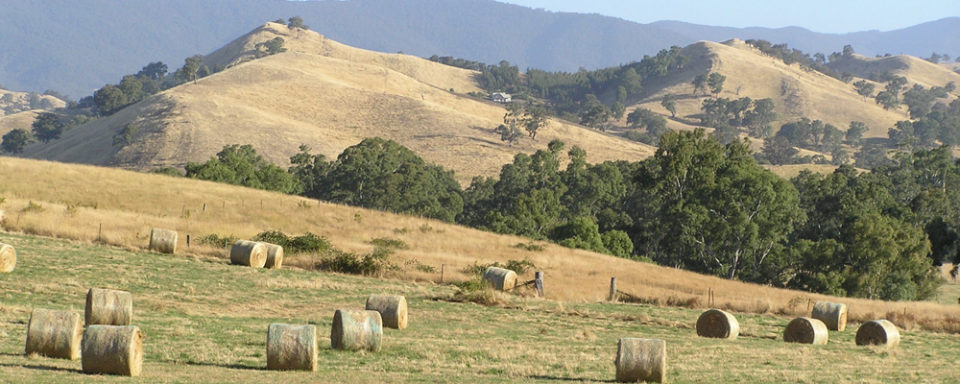 hay on hillside